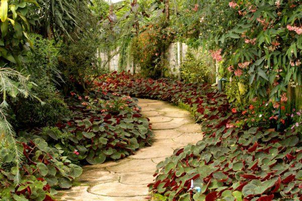 Rustic Cobblestone Garden Path